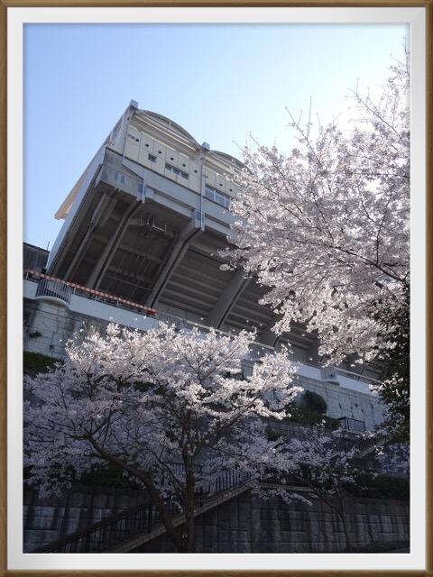 アイスタの桜!!